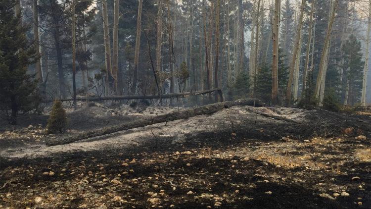 Röken ligger kvar brand träden.