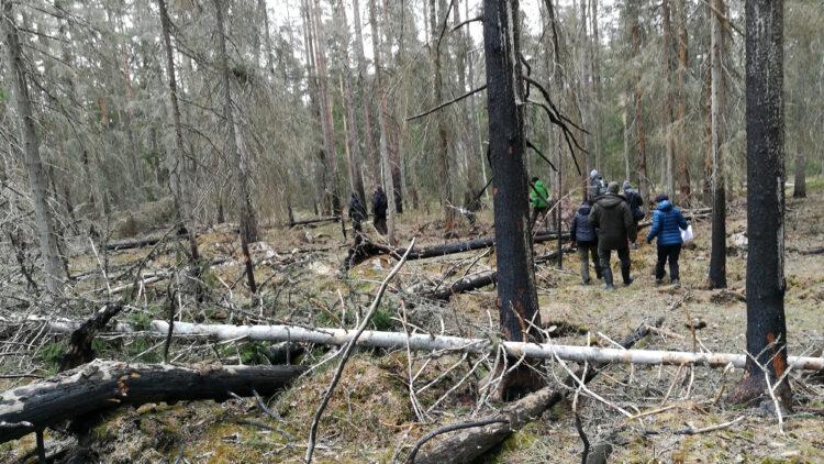En grupp männinskor går igenom skog med brända träd.