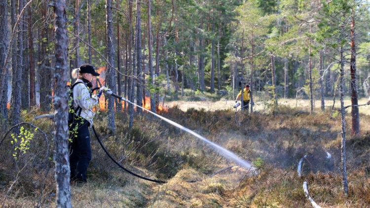 I förgrunden en kvinna klädd iisvarta byxor, ljus skjorta och svart keps håller i en brandslang. Hon sprutar vatten ner i marken. I bakgrunden syns eldslågor och en man kläff i svarta byxor och gul skjorta som går med en tändkanna.