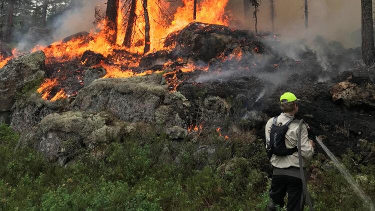 En mani mörka byxor, ljus skjorta, gul keps och svart ryggsäck sprutar vatten från en brandslang ner i marken. I bakgrunden brinner mark och stammar.