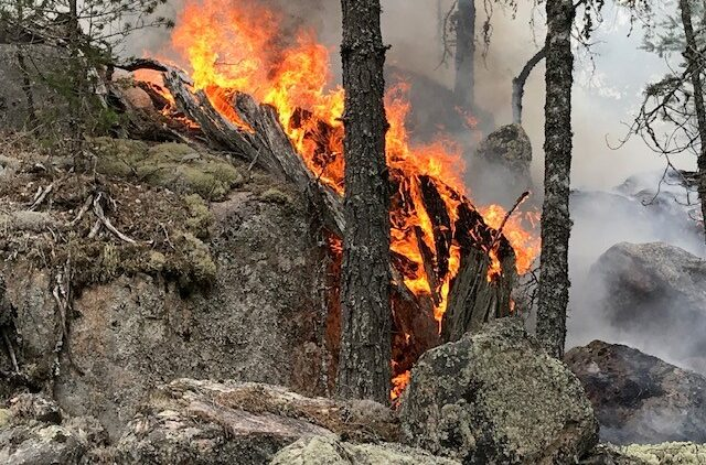 Bark och trädstammar brinnet bland klippor och stenar.