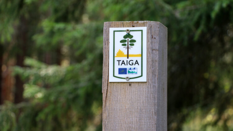 Litet plastmärkning på trästolpe i barrskog.