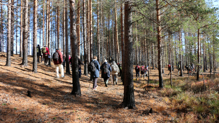 En grupp männinskor går genom en solig skog där trädstammarna är svarta längst mot marken.