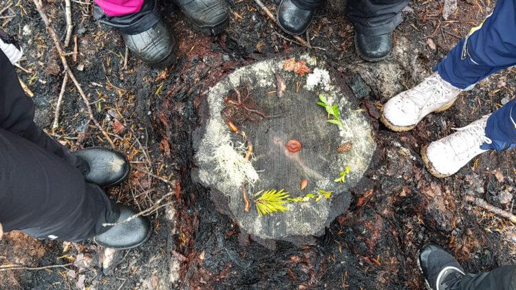 Stövelklädda fötter ståendes runt en stubbe som någon lagt olika växter på.