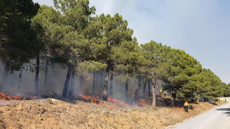 Gräs mellan tallar i en slänt invid en väg brinner. Flera personer i gula skjortor arbeter i bakgrunden.
