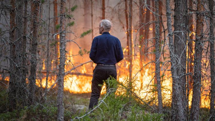 En vithårig man bakifrån, mannen spejar ut över eld som binner mellan träd.