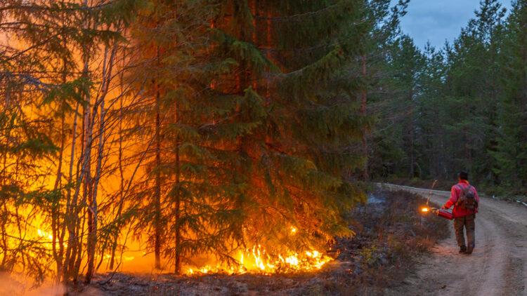En mani röd skjorta och eldkanna i handen går längs en skogsväg. Granar brinner med hög intensitet på sidan av vägen.