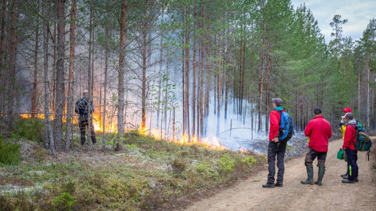 Fyra personer står på en skogsväg och iaktar eld i skogsslänt. En person står i slänten nära elden.
