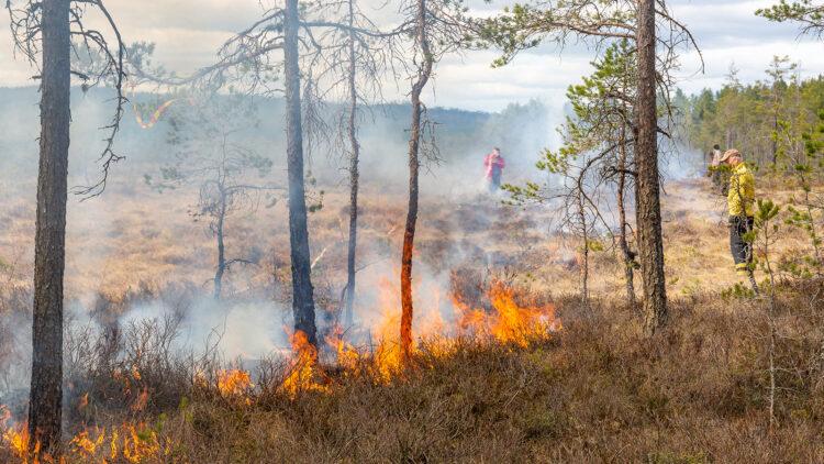 Eld brinner vid en myrkant.