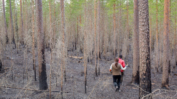 Två personer går eftervarandra genom skog som är askgrå och sotig.
