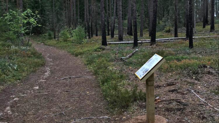 En meterbred stig går genom ett tallandskap. På höger sida om stigen står en skylt på ett träsställ.